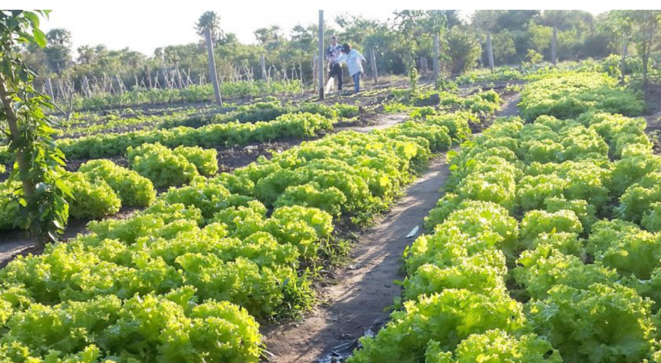 Agricultura en Fuerte Olimpo